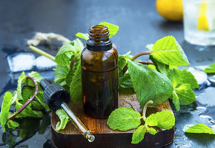 Stay Refreshed With Mint and Eucalyptus